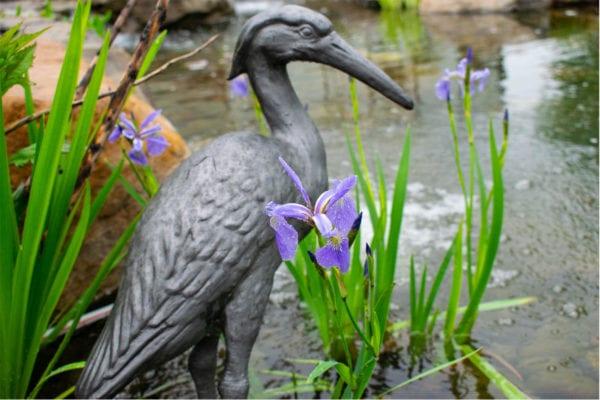 Iris Versicolor Blue Flag Iris